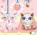 Gatos cuidados
