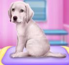 Pet shop do labrador