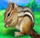 Cuidar do Esquilo