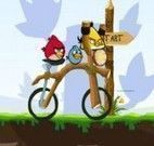 Angry birds de bicicleta