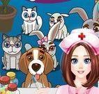 Animais no hospital cuidar