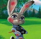 Curativos da coelha Judy