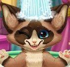 Banho do esquilo