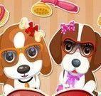 Salão de beleza dos cachorros