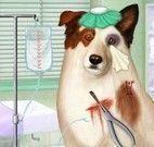 Cuidar do cachorro no hospital veterinário
