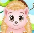 Cuidar do porco espinho bebê