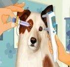 Cuidar dos olhos do cachorro