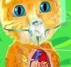 Cirurgia do coração do gato virtual