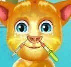 Cuidar do nariz do gatinho virtual