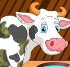 Banho da vaca