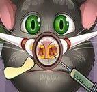 Gato virtual cuidar do nariz