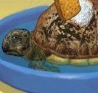 Cuidar de tartaruga