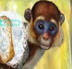 Cuidar do macaco