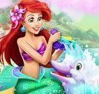 Banho no golfinho com Ariel