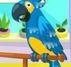 Cuidar do Papagaio Falante