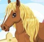 Cuidar do cavalo