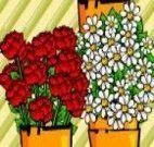 Florista