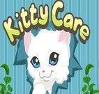 Lavar e cuidar de gatinhos