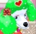 Vestir Poodle